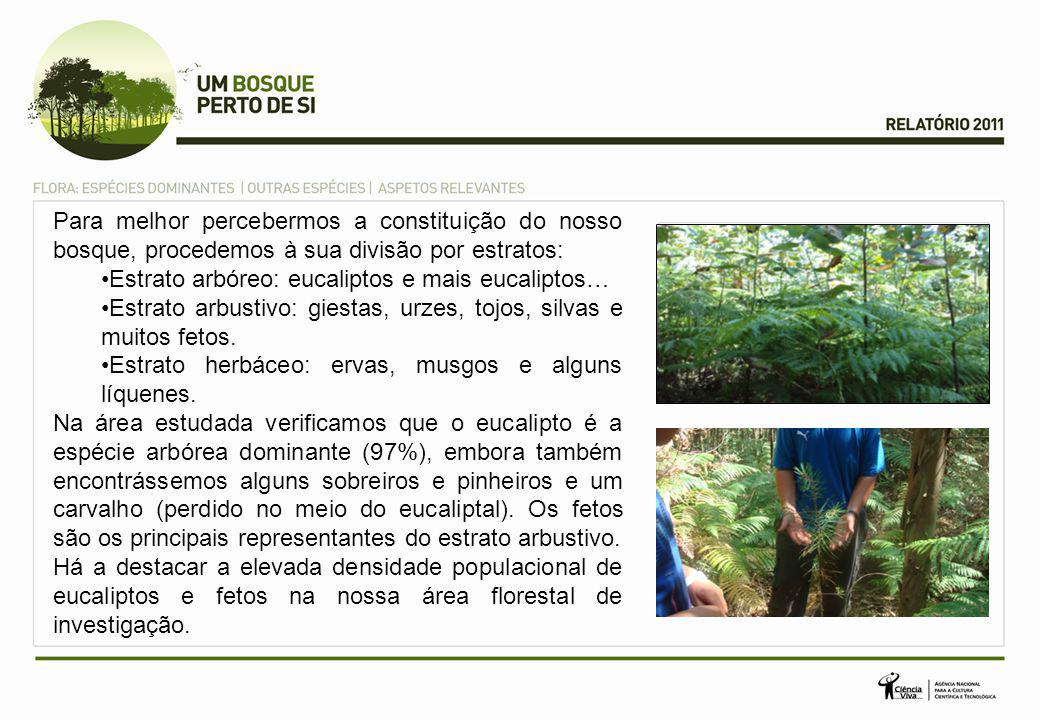 Para melhor percebermos a constituição do nosso bosque, procedemos à sua divisão por estratos: