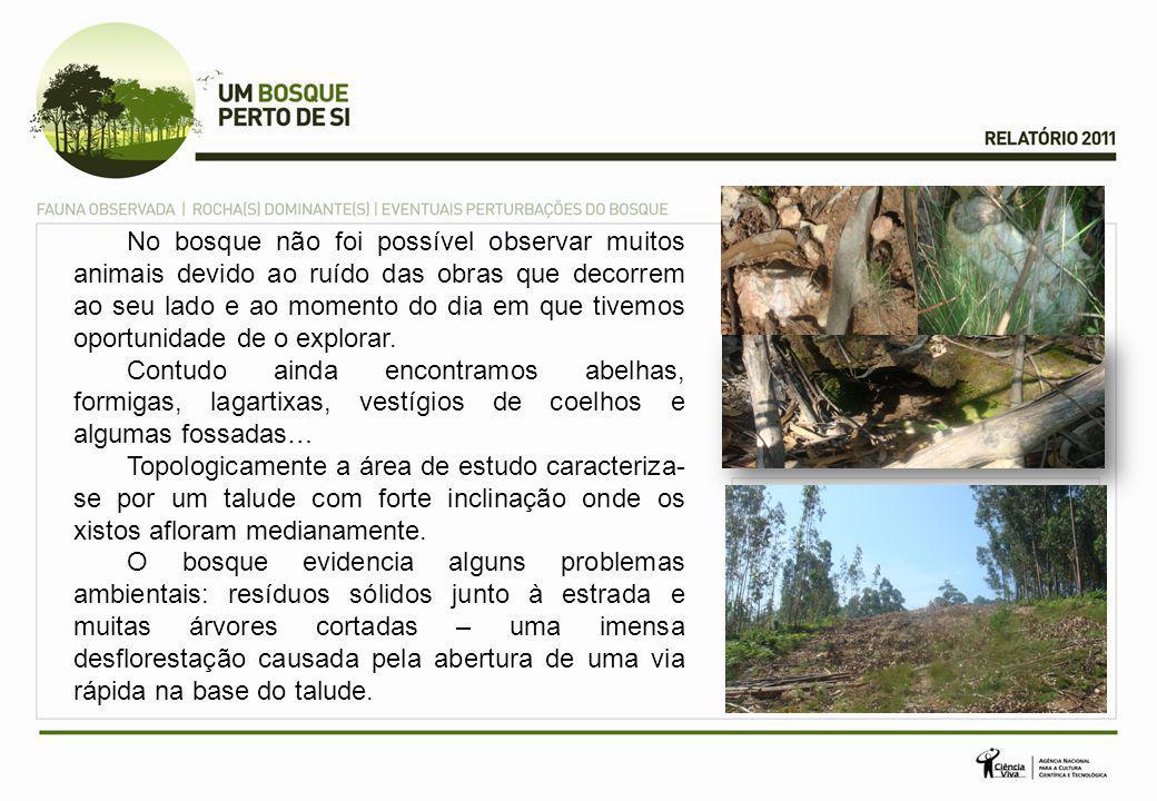 No bosque não foi possível observar muitos animais devido ao ruído das obras que decorrem ao seu lado e ao momento do dia em que tivemos oportunidade de o explorar.
