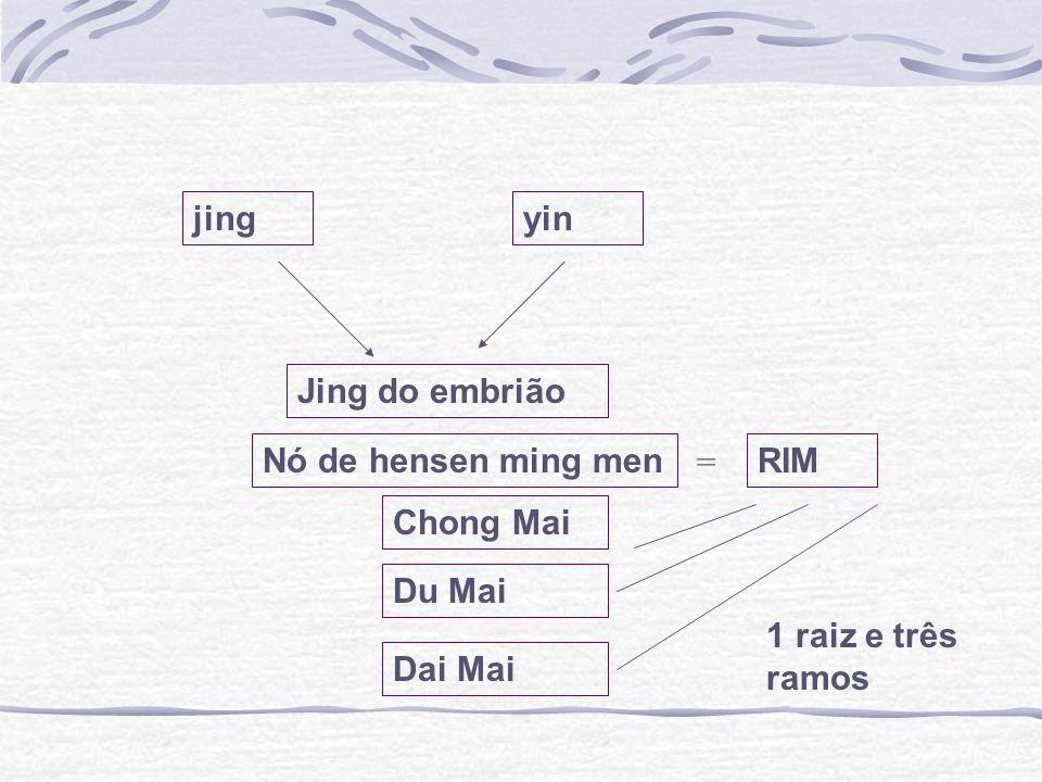 jing yin Jing do embrião Nó de hensen ming men = RIM Chong Mai Du Mai 1 raiz e três ramos Dai Mai