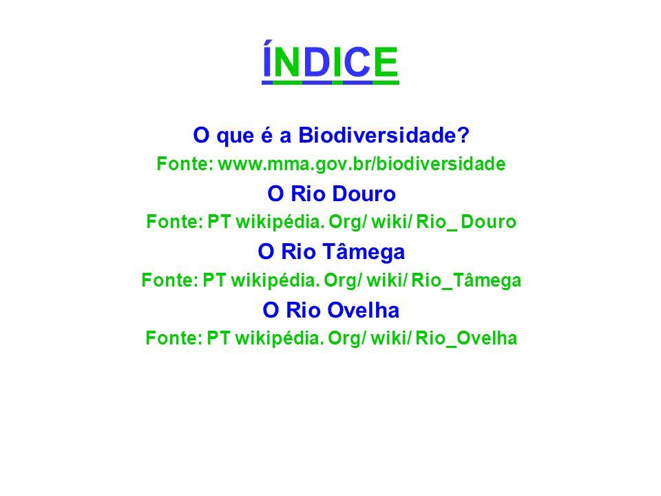 ÍNDICE O que é a Biodiversidade O Rio Douro O Rio Tâmega O Rio Ovelha
