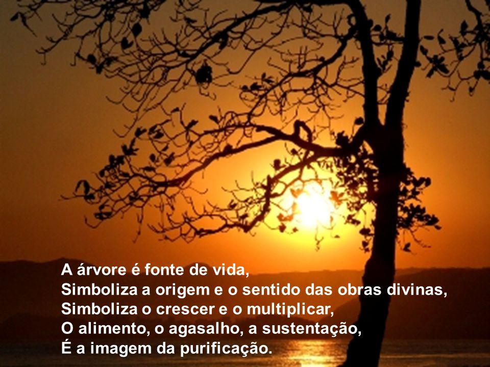 A árvore é fonte de vida, Simboliza a origem e o sentido das obras divinas, Simboliza o crescer e o multiplicar,