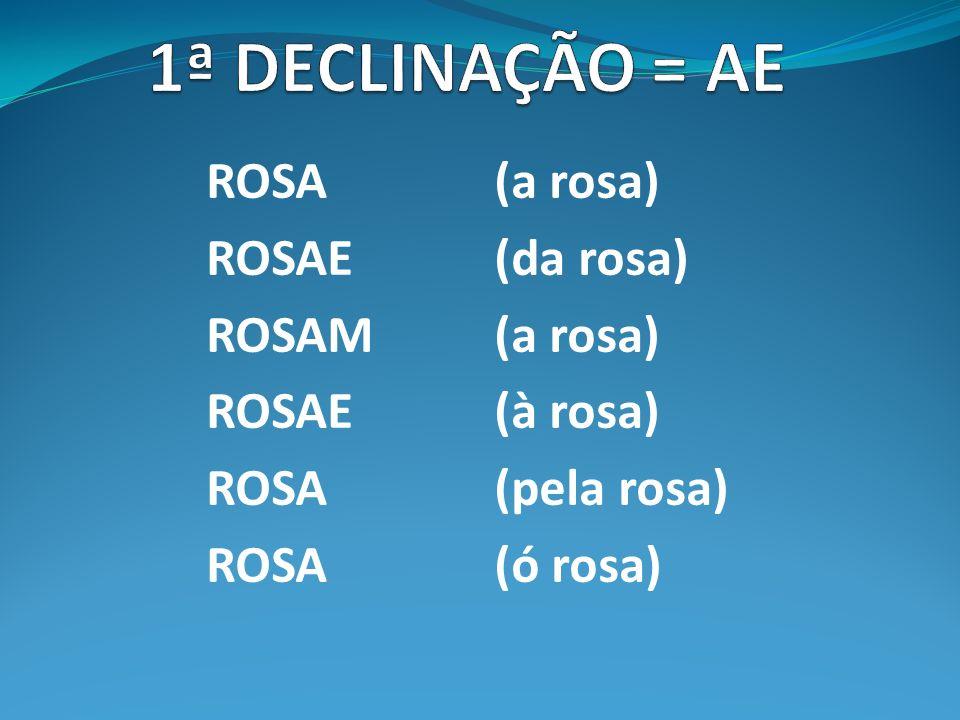 1ª DECLINAÇÃO = AE ROSA (a rosa) ROSAE (da rosa) ROSAM (a rosa)