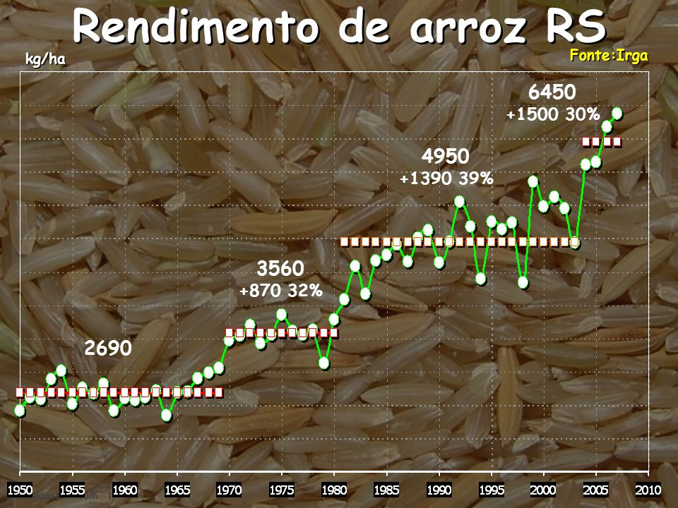Rendimento de arroz RS 6450 4950 3560 2690 +1500 30% +1390 39%