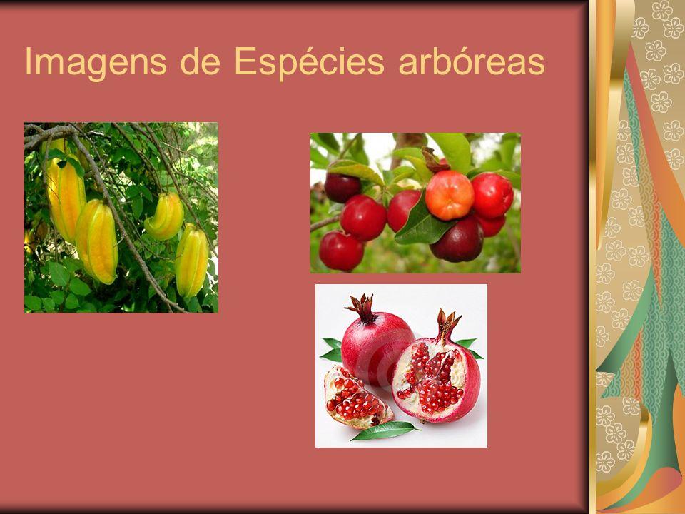 Imagens de Espécies arbóreas