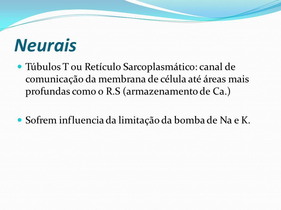 Neurais Túbulos T ou Retículo Sarcoplasmático: canal de comunicação da membrana de célula até áreas mais profundas como o R.S (armazenamento de Ca.)