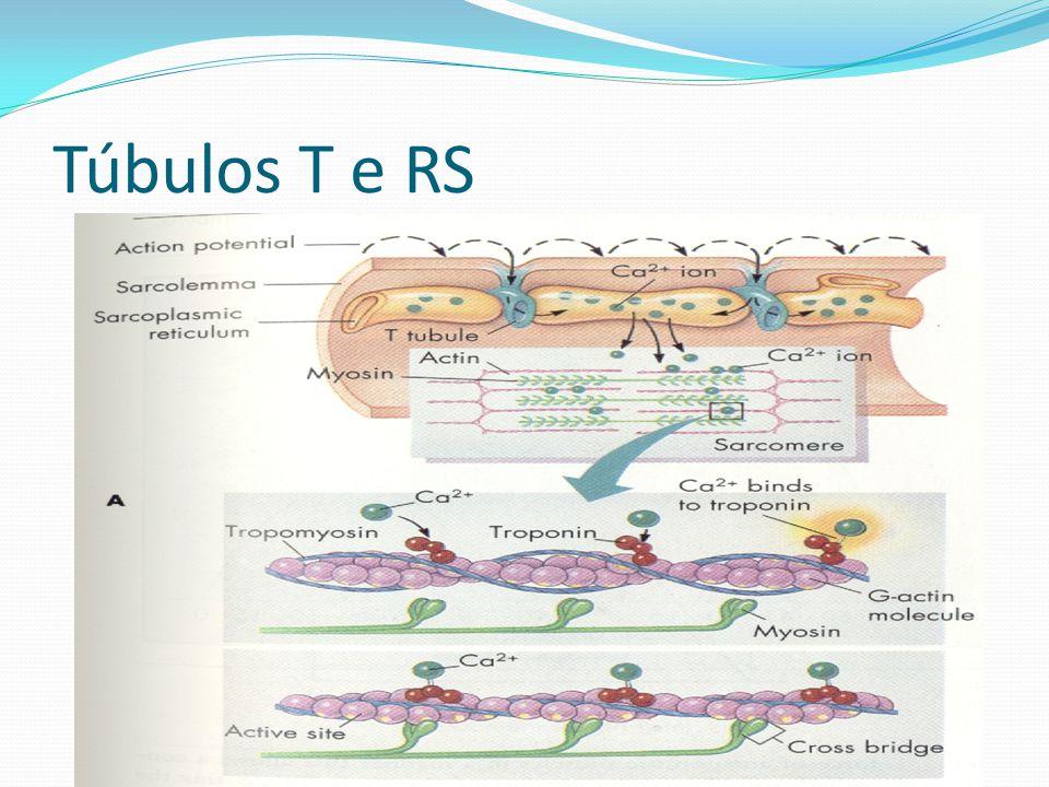 Túbulos T e RS