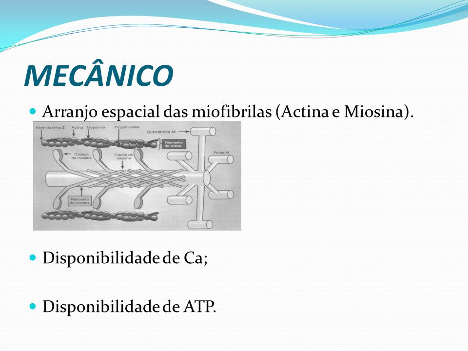 MECÂNICO Arranjo espacial das miofibrilas (Actina e Miosina).