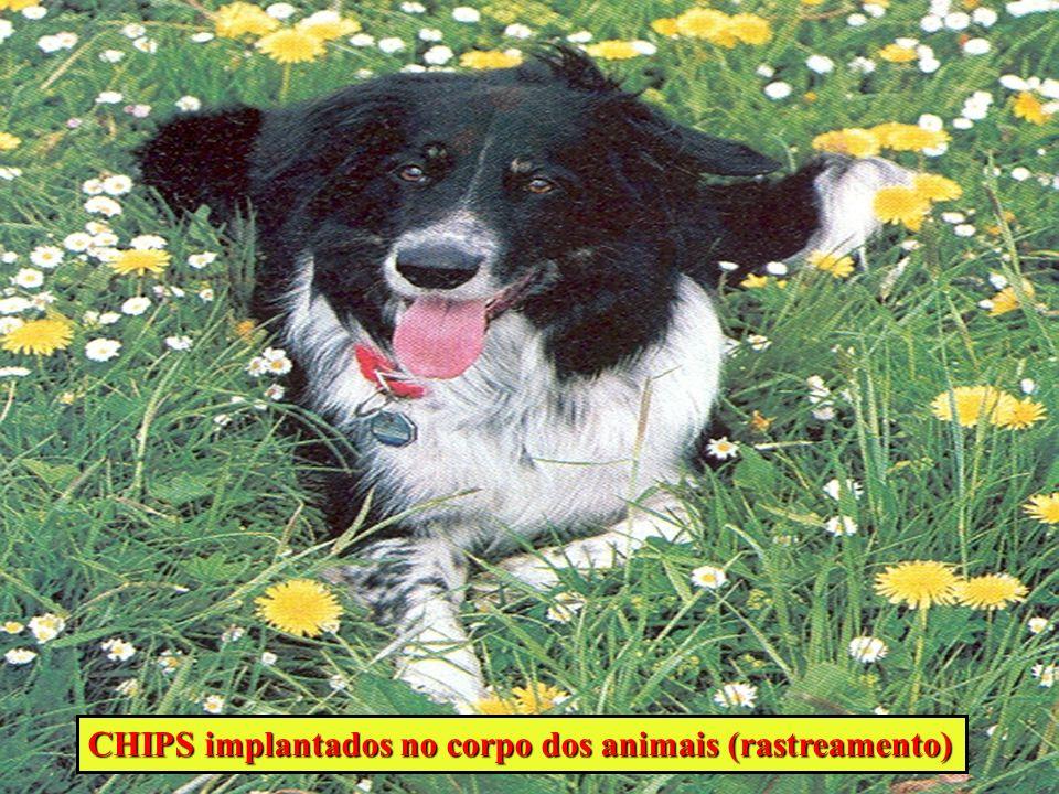 CHIPS implantados no corpo dos animais (rastreamento)