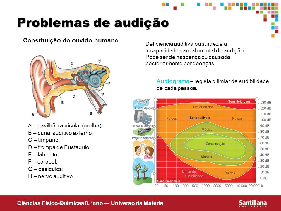 Constituição do ouvido humano