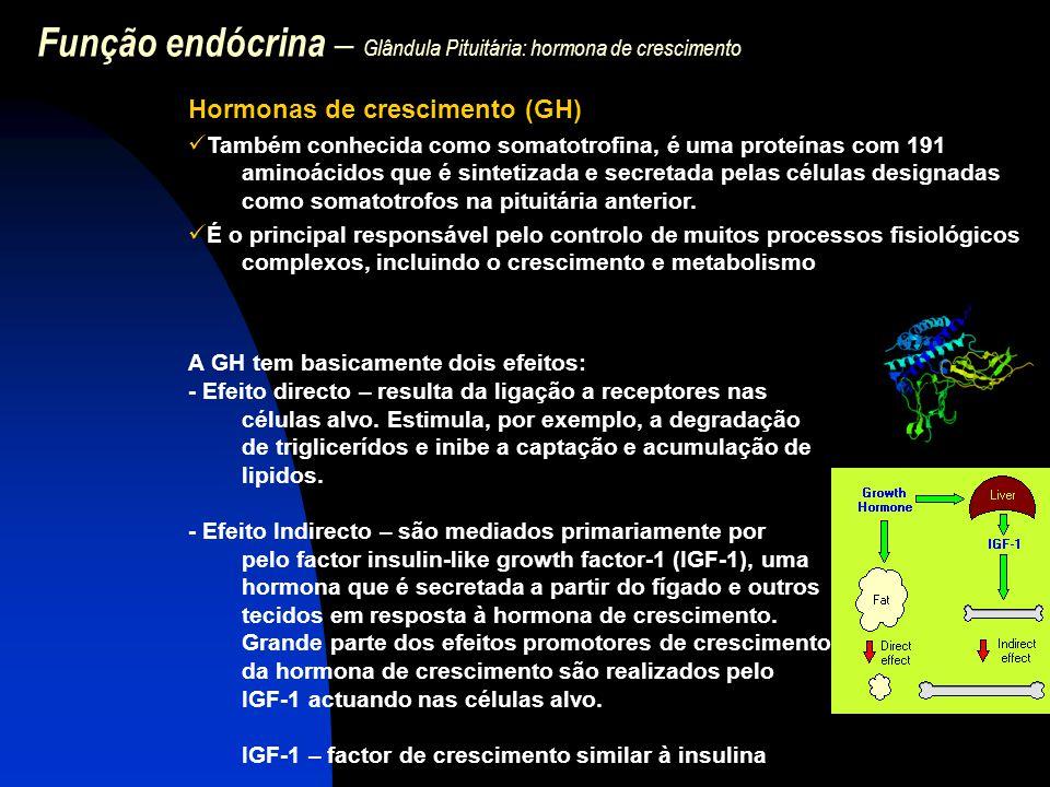 Função endócrina – Glândula Pituitária: hormona de crescimento