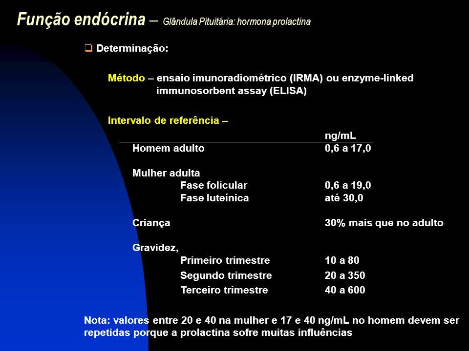 Função endócrina – Glândula Pituitária: hormona prolactina