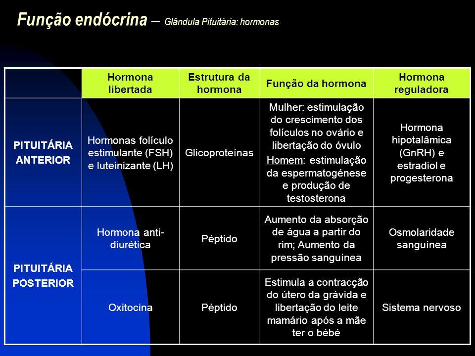 Função endócrina – Glândula Pituitária: hormonas