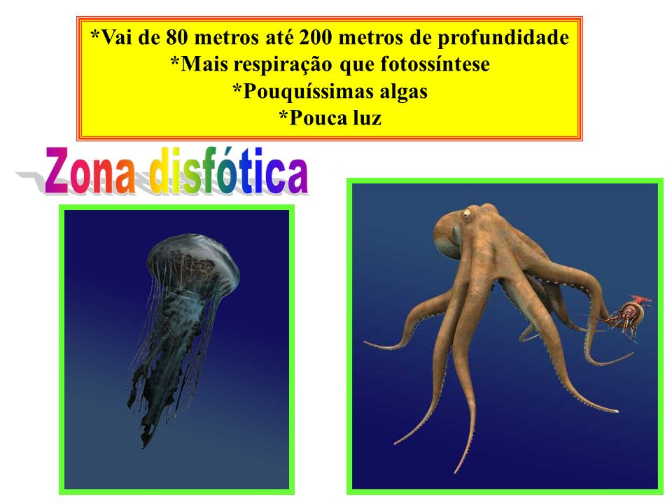 Zona disfótica *Vai de 80 metros até 200 metros de profundidade
