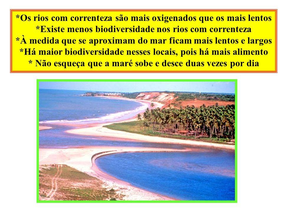*Os rios com correnteza são mais oxigenados que os mais lentos