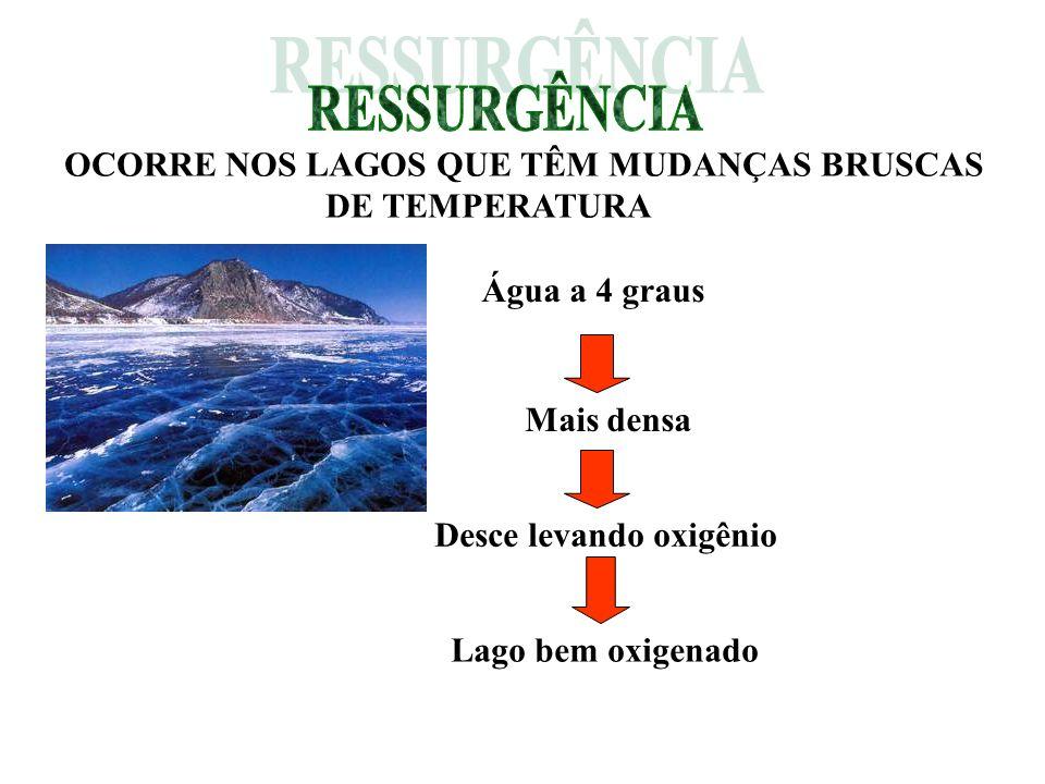 RESSURGÊNCIA OCORRE NOS LAGOS QUE TÊM MUDANÇAS BRUSCAS DE TEMPERATURA