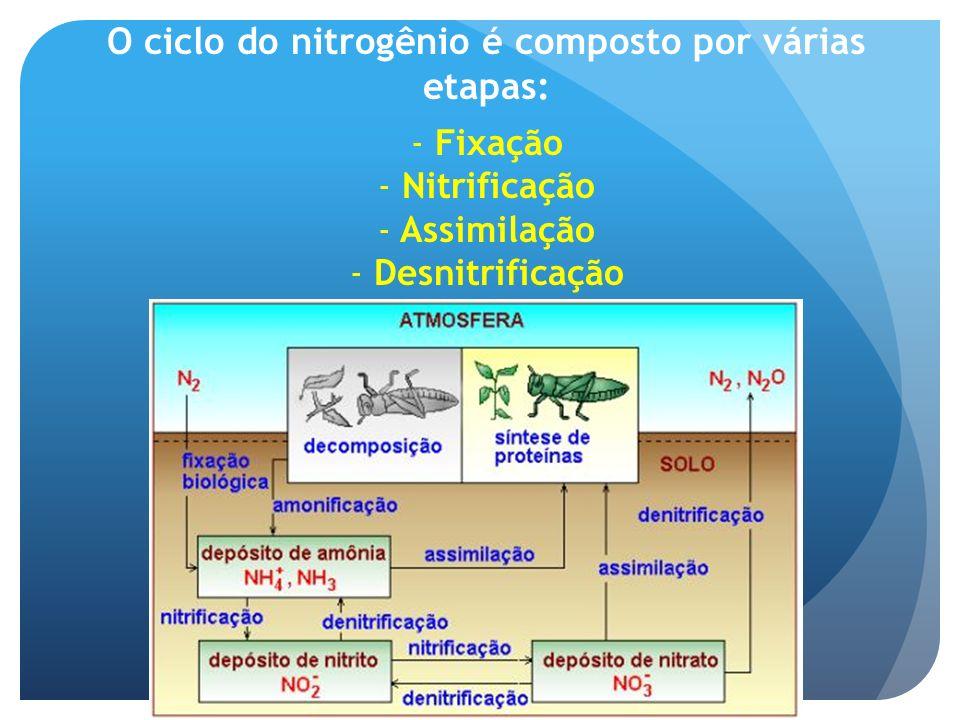 O ciclo do nitrogênio é composto por várias etapas: