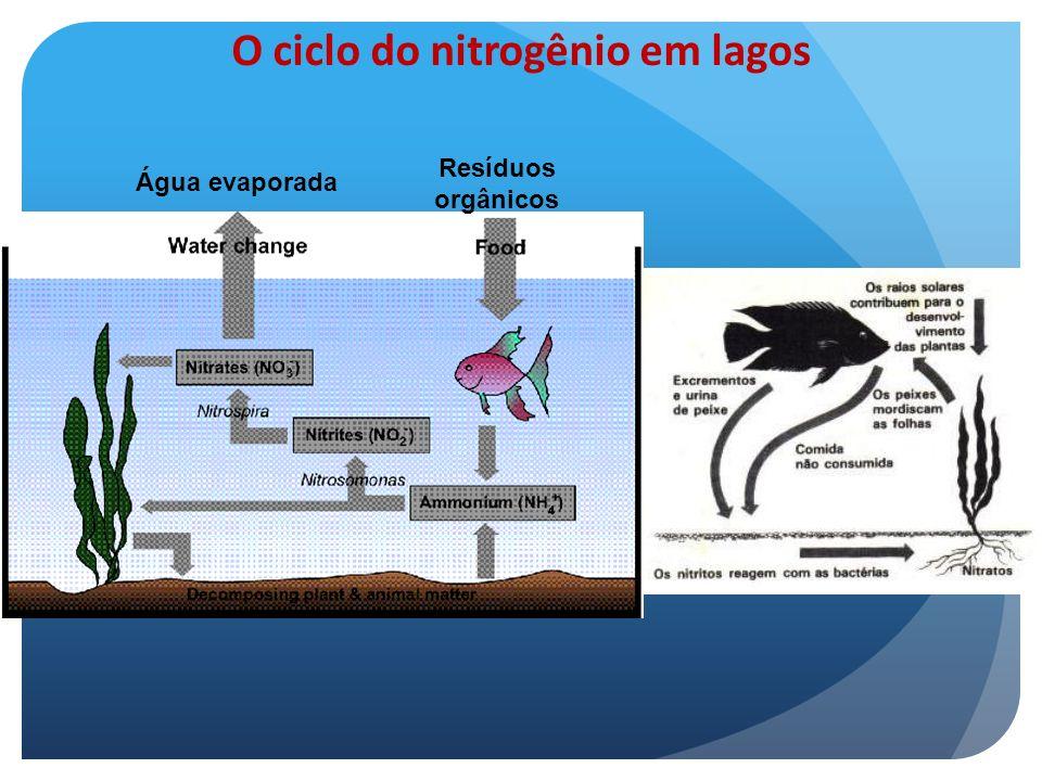 O ciclo do nitrogênio em lagos