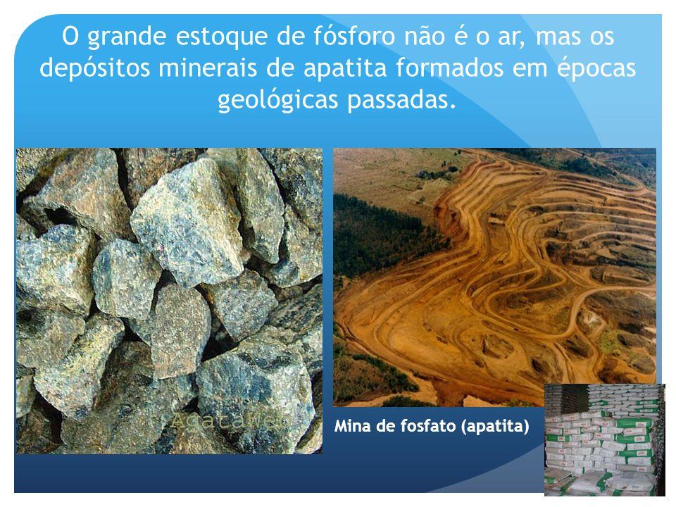 O grande estoque de fósforo não é o ar, mas os depósitos minerais de apatita formados em épocas geológicas passadas.