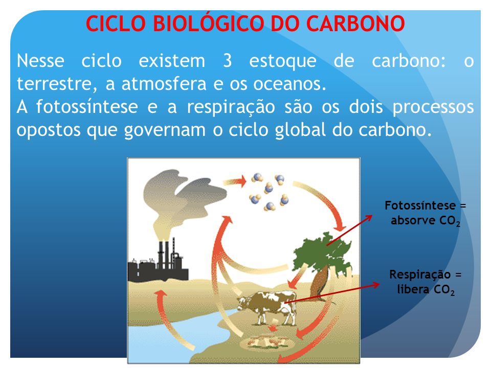 CICLO BIOLÓGICO DO CARBONO Fotossíntese = absorve CO2