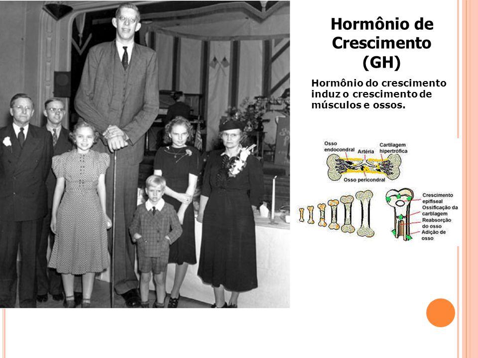 Hormônio de Crescimento (GH)