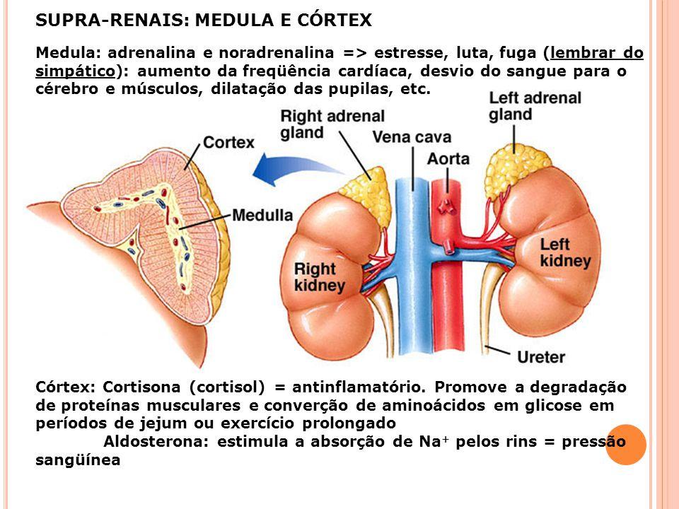 SUPRA-RENAIS: MEDULA E CÓRTEX