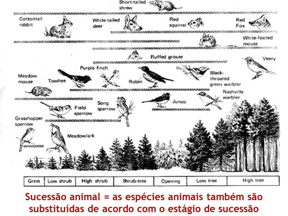 Sucessão animal = as espécies animais também são substituídas de acordo com o estágio de sucessão