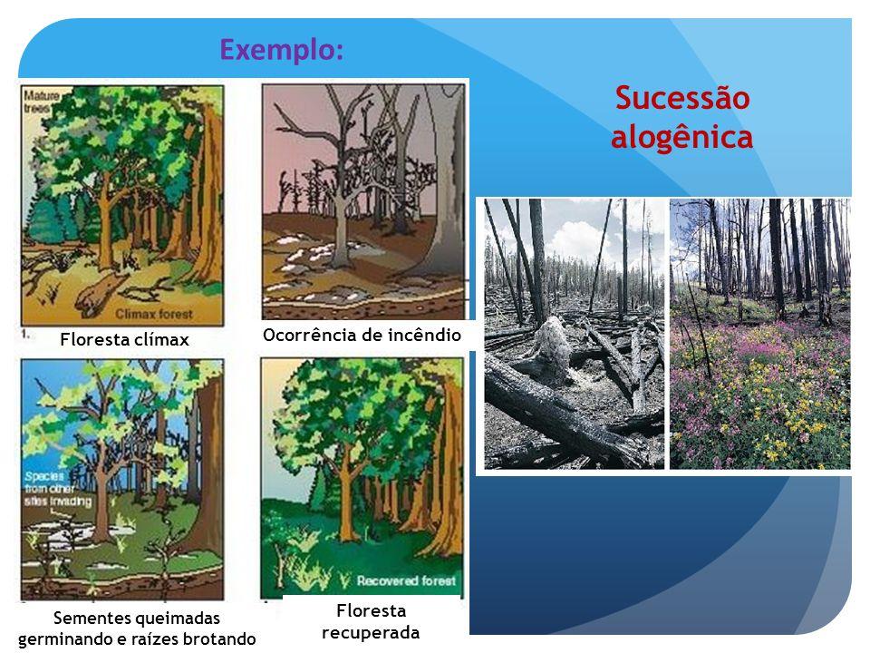 Ocorrência de incêndio Sementes queimadas germinando e raízes brotando