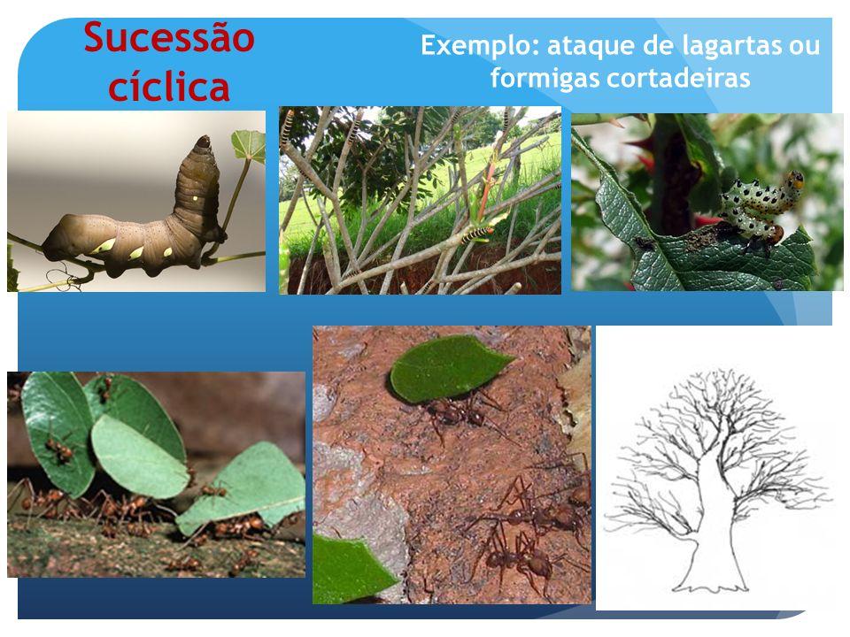 Exemplo: ataque de lagartas ou formigas cortadeiras