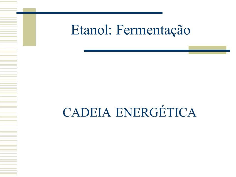 Etanol: Fermentação CADEIA ENERGÉTICA