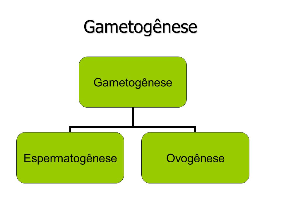 Gametogênese