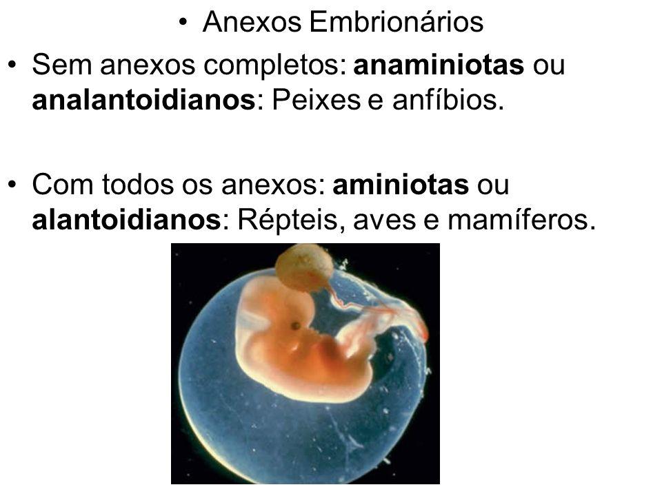 Anexos Embrionários Sem anexos completos: anaminiotas ou analantoidianos: Peixes e anfíbios.
