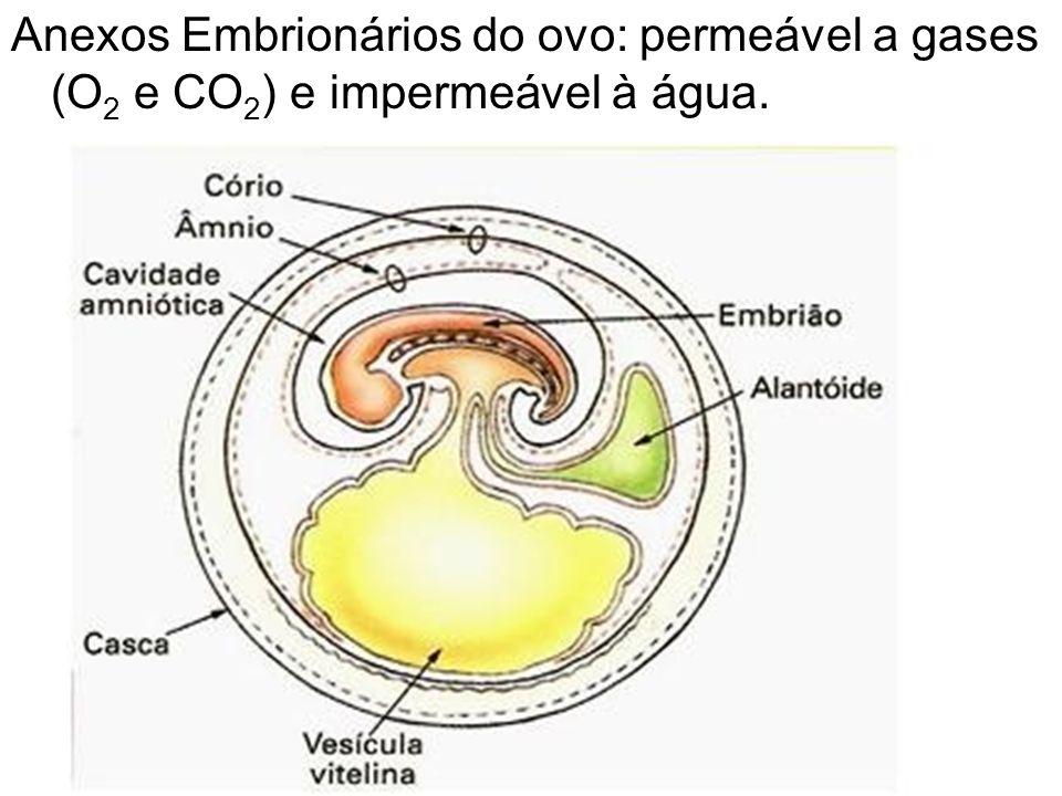 Anexos Embrionários do ovo: permeável a gases (O2 e CO2) e impermeável à água.