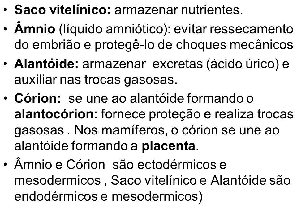 Saco vitelínico: armazenar nutrientes.
