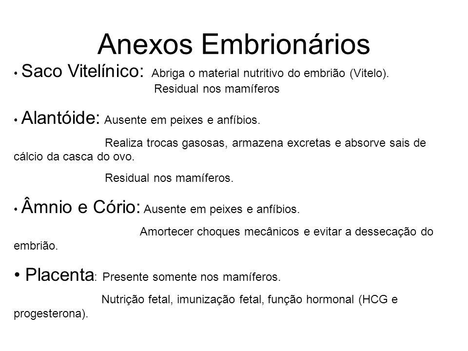 Anexos Embrionários Placenta: Presente somente nos mamíferos.