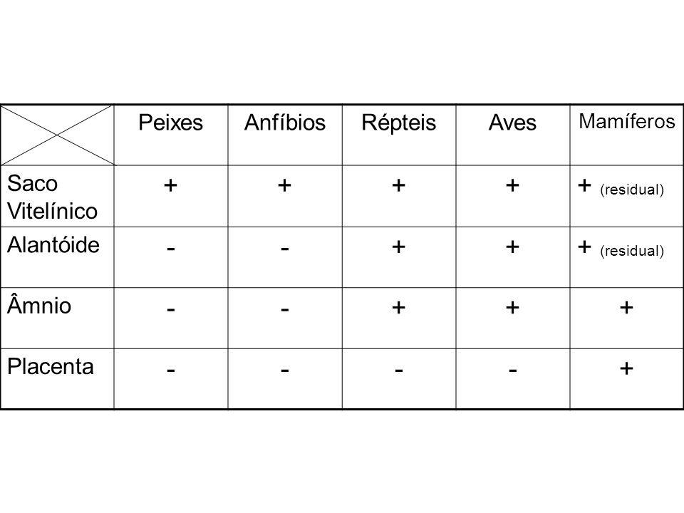 + + (residual) - Peixes Anfíbios Répteis Aves Saco Vitelínico