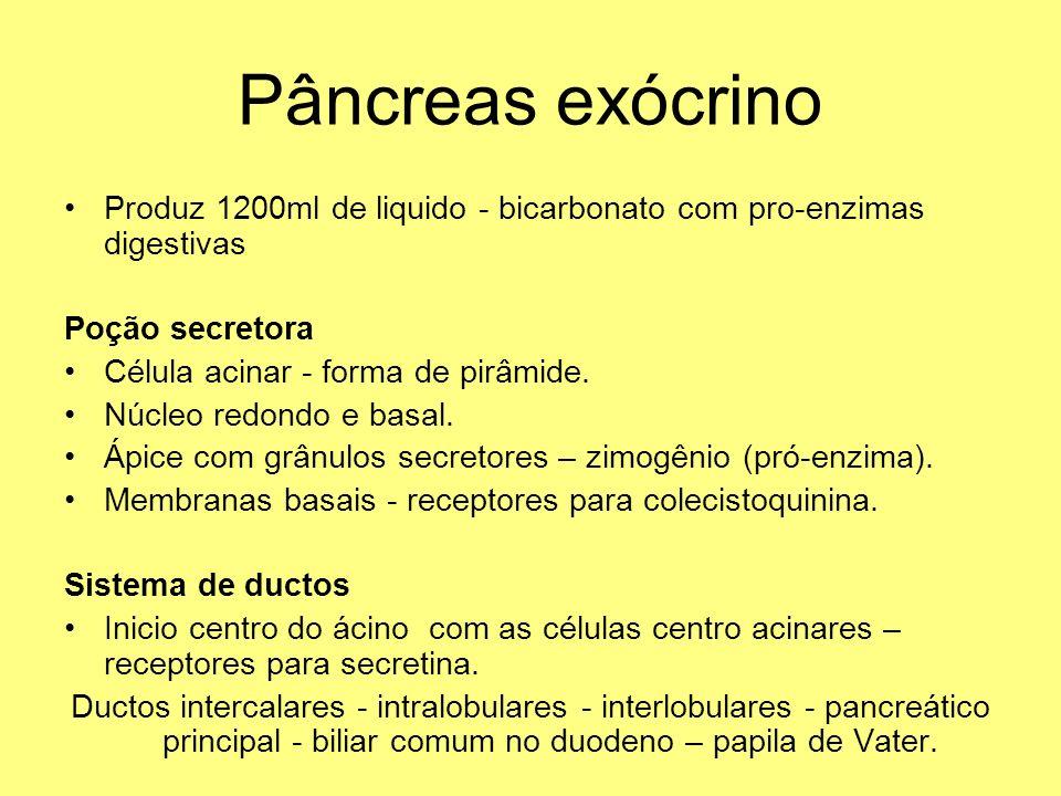 Pâncreas exócrino Produz 1200ml de liquido - bicarbonato com pro-enzimas digestivas. Poção secretora.