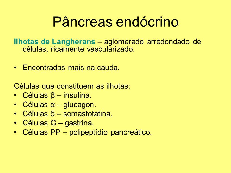 Pâncreas endócrino Ilhotas de Langherans – aglomerado arredondado de células, ricamente vascularizado.