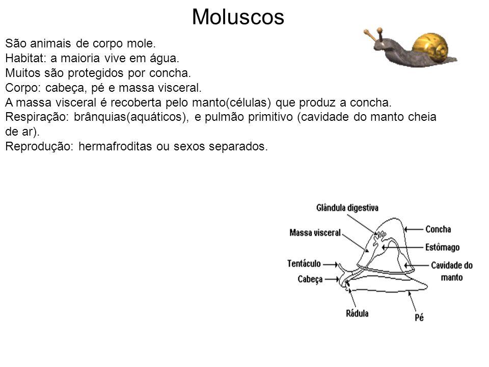 Moluscos São animais de corpo mole. Habitat: a maioria vive em água.
