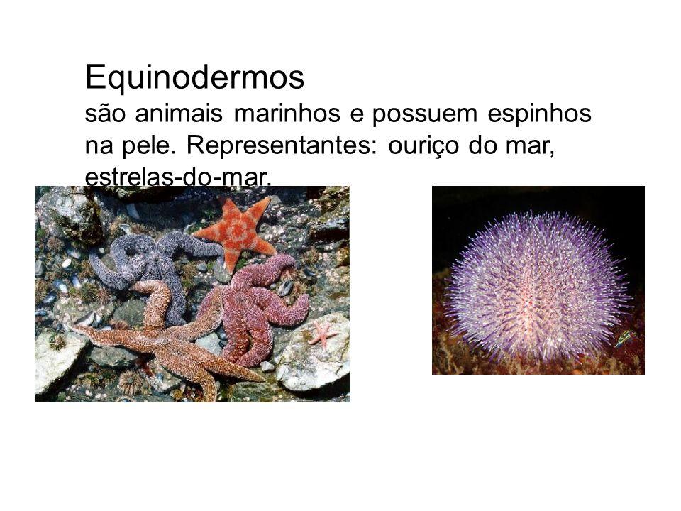 Equinodermos são animais marinhos e possuem espinhos na pele.