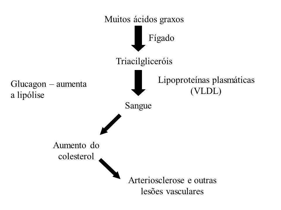Lipoproteínas plasmáticas (VLDL) Glucagon – aumenta a lipólise