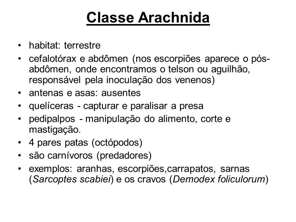 Classe Arachnida habitat: terrestre