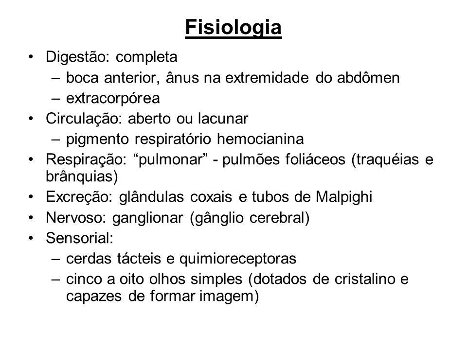 Fisiologia Digestão: completa
