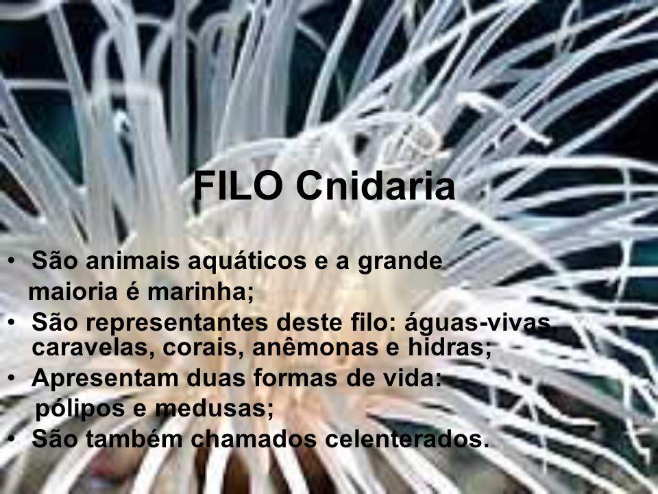 FILO Cnidaria São animais aquáticos e a grande maioria é marinha;