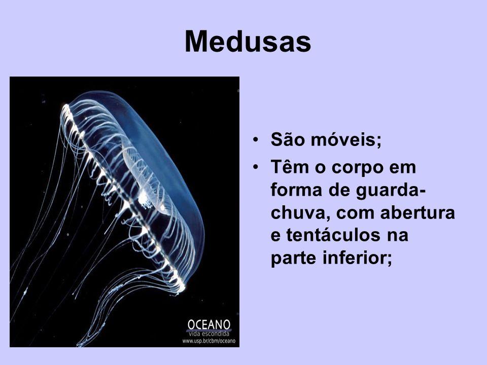 Medusas São móveis; Têm o corpo em forma de guarda-chuva, com abertura e tentáculos na parte inferior;