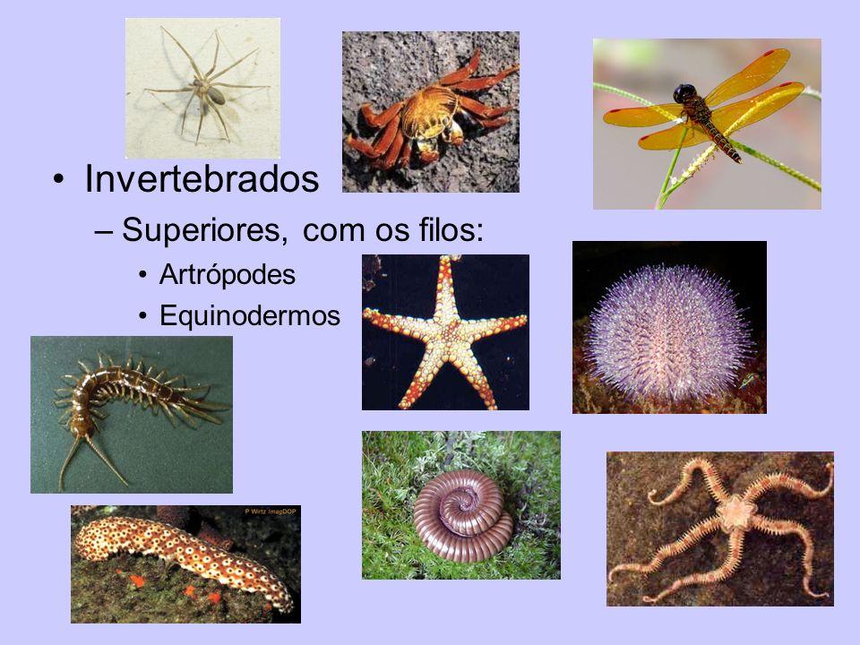 Invertebrados Superiores, com os filos: Artrópodes Equinodermos