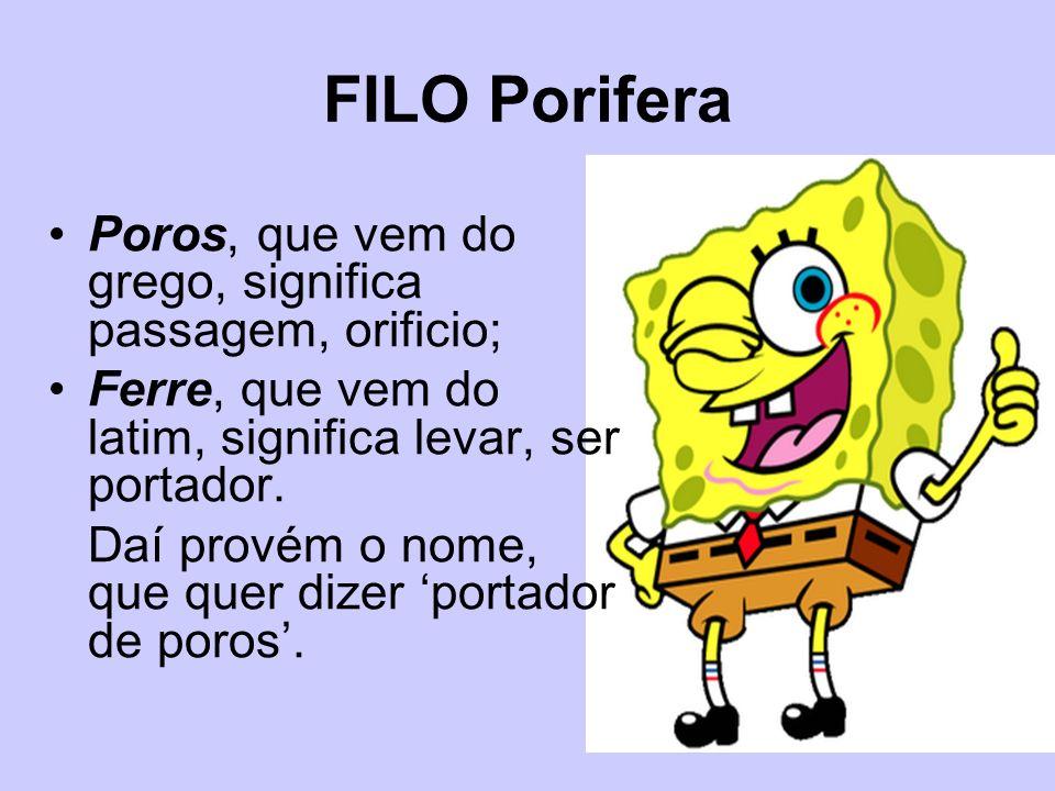 FILO Porifera Poros, que vem do grego, significa passagem, orificio;