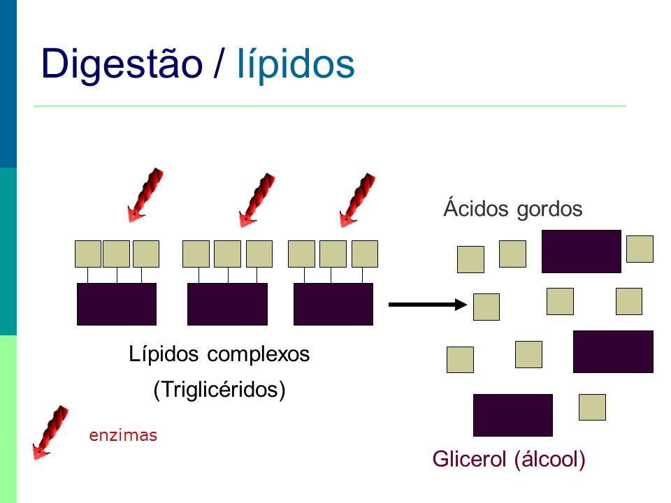Digestão / lípidos Ácidos gordos Lípidos complexos (Triglicéridos)
