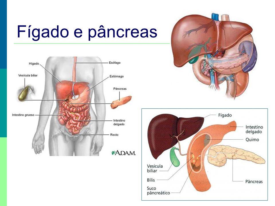 Fígado e pâncreas Funções do fígado: