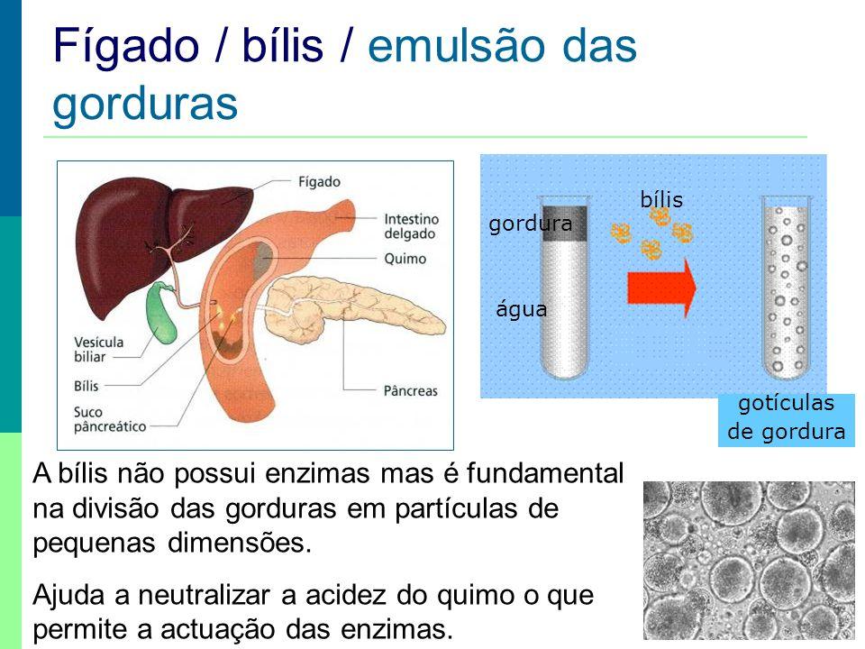 Fígado / bílis / emulsão das gorduras