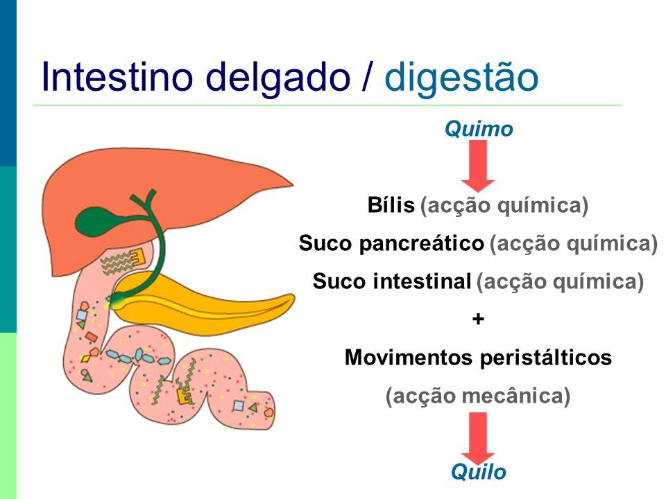 Intestino delgado / digestão